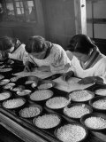 Pearl Sorters at Work Categorizing According to Size at Factory Photographic Print by Alfred Eisenstaedt