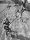 Little Girl Riding Her Tricycle, Leading Francis the Mule Premium Photographic Print by Allan Grant