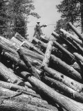 Man Lifting Logs Out of a Lumber Pile Premium Photographic Print by J. R. Eyerman
