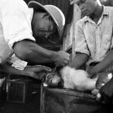 Monkey Getting Medical Attention on a Monkey Colony Photographic Print by Hansel Mieth