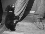 Bear Cub Dangling on Man's Leg Premium Photographic Print