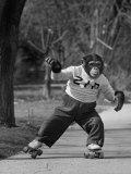 Performing Chimpanzee Zippy Riding on Skates Fotografisk tryk