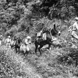 US Soldiers and Pack Mules Making their Way Up a Steep Incline in the Canal Zone Photographic Print