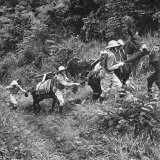Men and Pack Animals Climbing a Steep Hill Photographie