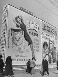 Billboard Advertising White Kitten Cloth Premium Photographic Print