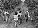 Coffee Workers Walking Along a Path Through the Fields Premium Photographic Print