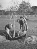 Rural Family Working Together Planting Little Apple Tree Premium Photographic Print by Yale Joel