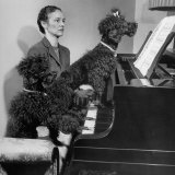 French Poodles Sitting at Piano with Woman Photographic Print