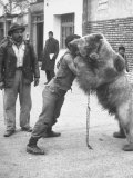 An Iranian Performace of a Man Wrestling a Bear in Public Premium Photographic Print by Dmitri Kessel