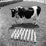 Cow Posed with its Daily Output of Several Dozen Quarts of Milk Photographic Print by Loomis Dean