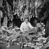Man Sitting Among Raw Furs at the Hudson's Bay Company Photographic Print