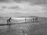 People Playing in the Water of the Great Salt Lake Premium Photographic Print