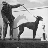 Arranging Greyhound Winner for Picture with its Trophy Photographic Print