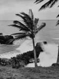 Wind Blowing the Palm Trees and the Waves Pounding on the Jamaica Coastline Reproduction photographique sur papier de qualité
