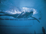 Underwater Shot of Debbie Meyer Swimming at the Summer Olympics Premium Photographic Print
