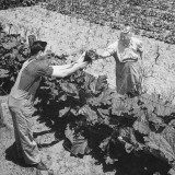 Man Who Operates a Huckster Wagon Accepting Vegetables from Farm Wife Premium Photographic Print by Horace Bristol