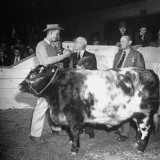 A Judge Handing the Owner a Ribbon for Big Boy Claude's Acheivement Premium Photographic Print by George Skadding