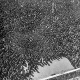 Aerial View of Propoganda Leaflets Showering the Crowds Premium Photographic Print by Dmitri Kessel