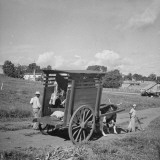 A Steer Driving a Wagon Filled with Raw Meat Premium Photographic Print by Hart Preston