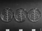 Camellia Plants in Petri Dish for Growth Harmone Experiment Premium Photographic Print by Herbert Gehr