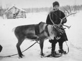 Laplander Helping to Move Reindeer Away from Russian Positions During the Russo-Finnish War Premium Photographic Print by Carl Mydans