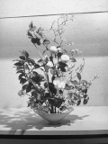 Floral Arrangement Being Shown at a Flower Show Premium Photographic Print by J. R. Eyerman