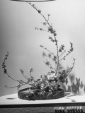 Floral Arrangement Being Shown at a Flower Show Premium Photographic Print by J. R. Eyerman