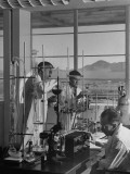 Three Men Working with Elaborate Array of Glass Tubes Premium Photographic Print by J. R. Eyerman