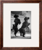 French Poodles Standing on Hind Legs Framed Photographic Print by Mark Kauffman