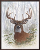Deer Buck Portrait Art by Ron Jenkins