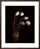 Dramatic Tulips Posters by Dick &amp; Diane Stefanich