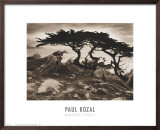 Monterey Cypress Print by Paul Kozal