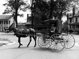 An African-American Man Driving a Mule-Drawn Carriage Premium Photographic Print