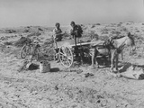 15-Year-Old Beachcomber Putting His Day's Haul in to a Donkey Cart Premium Photographic Print