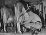 A Boy Milking a Cow Premium Photographic Print