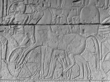 Carving of a Horse on Wall of Temple Built by Ramses II at Abydos Premium Photographic Print