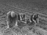 The Eldest Boys Helping their Father in the Farm Fields Premium Photographic Print