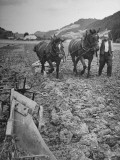 Farmer Using Two Horses and a Harrow to Plow His Field Premium Photographic Print