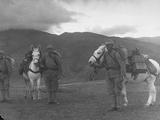 Turkish Soldiers with Mules Carrying Machine Guns Premium Photographic Print