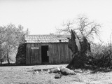 Exterior of Mark Twain's Cabin on Jackass Hill Premium Photographic Print
