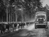 US Army Soldiers Walking their Horses Along a Road During Maneuvers Premium Photographic Print
