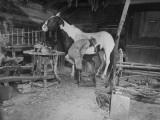 A Blacksmith Shoeing a Horse in His Shop Premium Photographic Print
