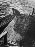 Duck Hunter Frank Freudenberg Loading Decoys for Ducks at Dawn Premium Photographic Print