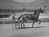 Man Riding in Harness Behind Horse Premium Photographic Print
