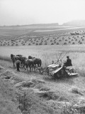 Peasant Farmers Working in Wheat Fields Premium-Fotodruck