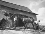 Blacksmith Putting Shoe on Horse Premium Photographic Print