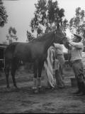 Jockey Johnny Longden Tending to His Horse Premium Photographic Print