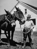 Farmer J. Vivian Truman, Brother of Harry Truman, Working with a Pair of Mules Premium Photographic Print