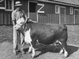 Farmer Standing Next to His Prize Bull Premium Photographic Print