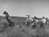 Men Rounding Up Wild Horses on Core Island Premium Photographic Print
